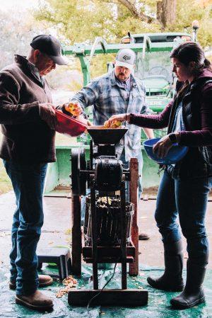 pressing-apples